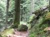 stollenbacher014